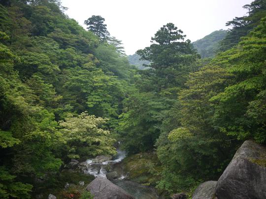 [일본] 야쿠시마 트레킹4일