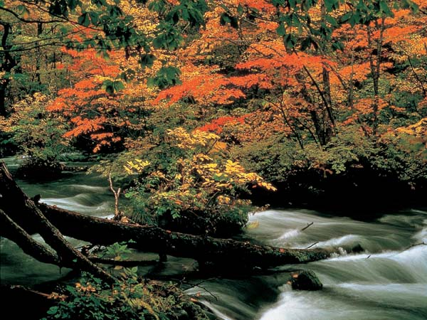 오이라세계류의 가을단풍