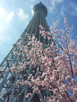 東京自由行三天