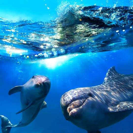 돌고래 와칭투어