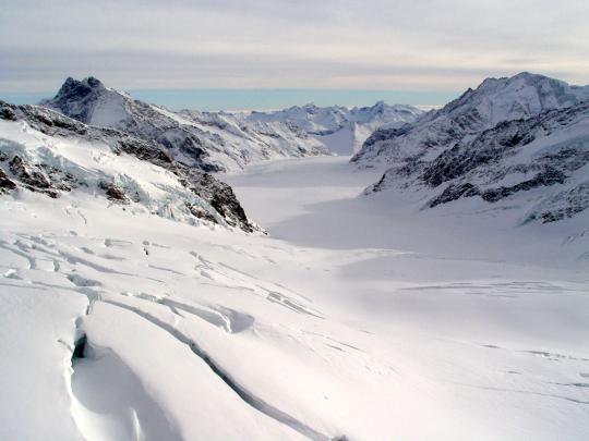 알레치 빙하