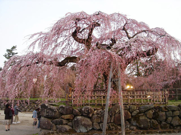 히로사키공원