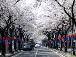 首爾春季賞櫻團體五日