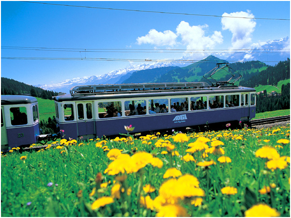 루체른_리기 산악열차